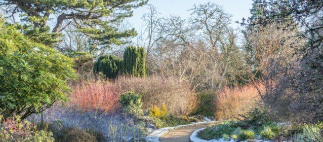 8 labores de mantenimiento de tu jardín en invierno